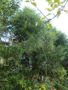 http://www.tree-feller.co.uk
