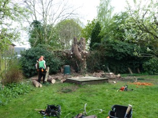 Brendan Tree Feller - job underway 4