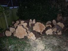 Brendan Tree Feller - timber