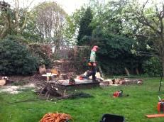 Brendan Tree Feller - job underway 6
